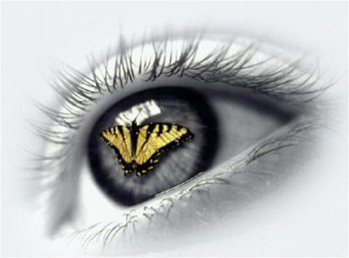 Resultado de imagem para olhos de uma borboleta